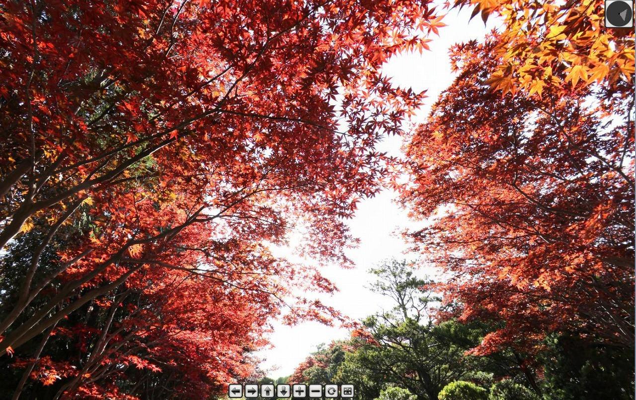 s-momiji1019.jpg