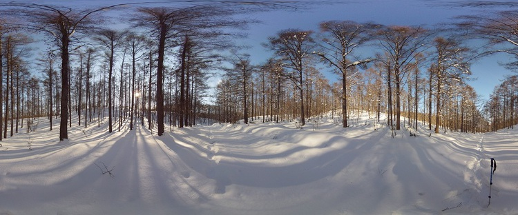 0104_shirahata.jpg